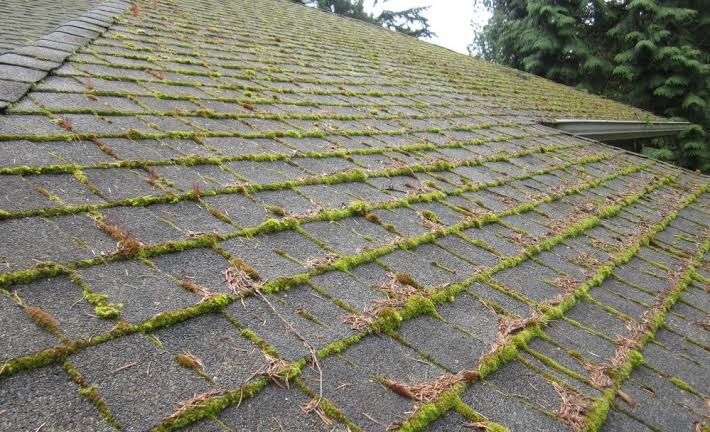 Algae on the Roof