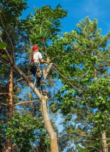 trim-trees-before-winter-image-nashville-tn-l-&-l-contractors